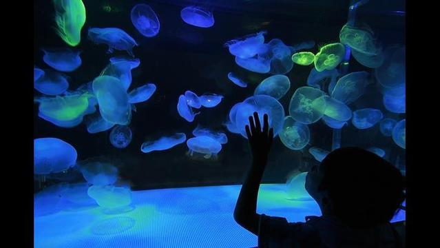 PETA warns city of Austin to watch for animal mistreatment at new aquarium