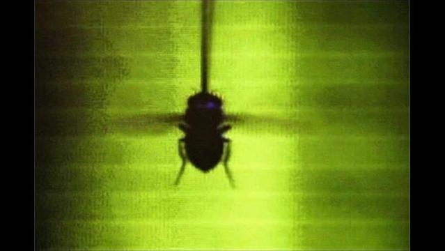 The complex story of how flies fly